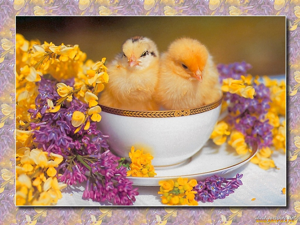 отсутствие картинки с курицами доброе утро каждый этих оттенков